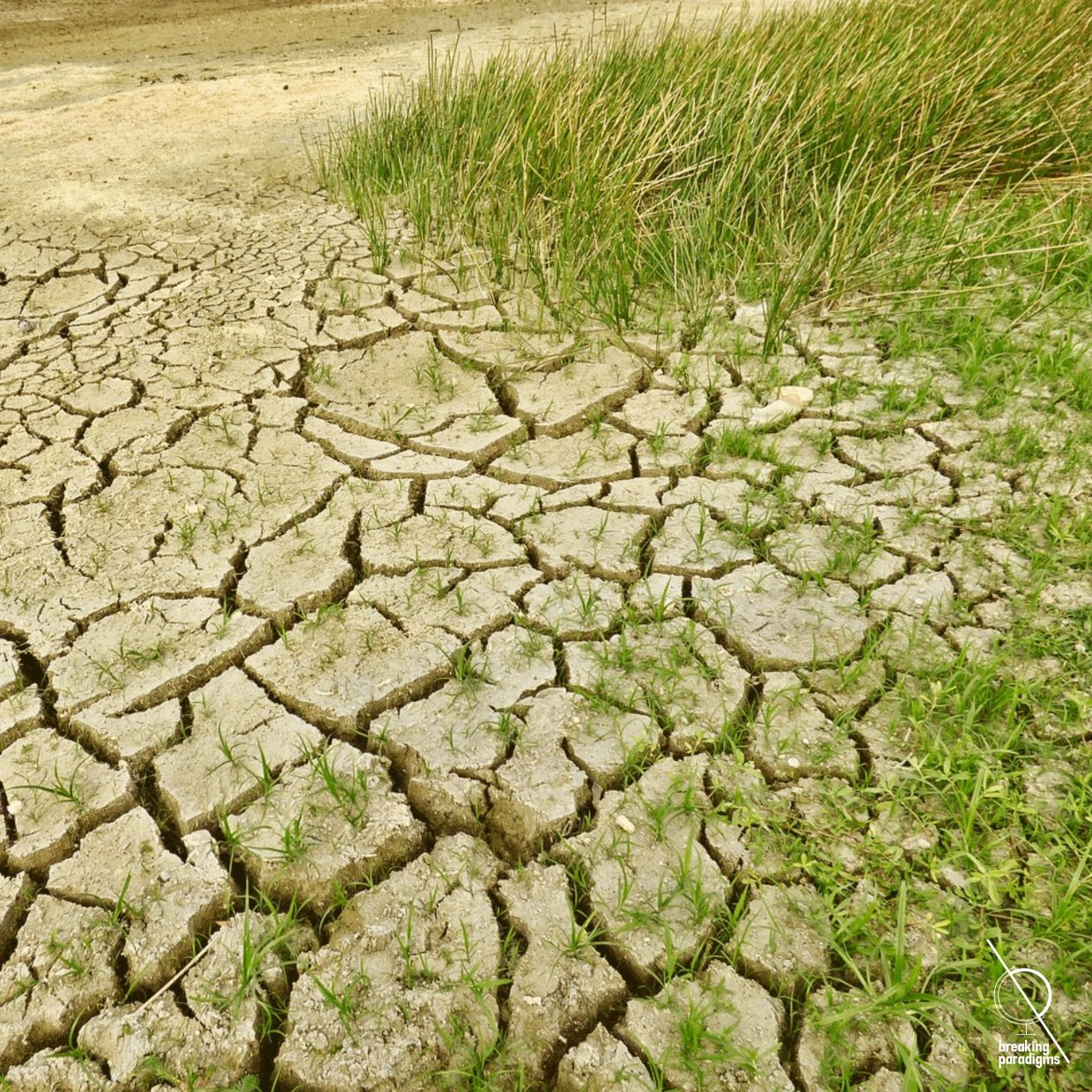 drought as symbol for climate change